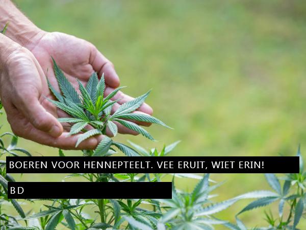 Brabantse boeren voor commerciële hennepteelt. Vee eruit, wiet erin!