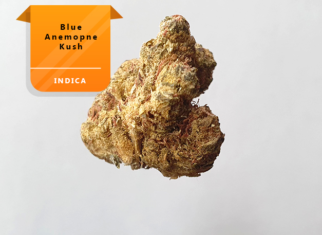 Blue-Anemone-Kush