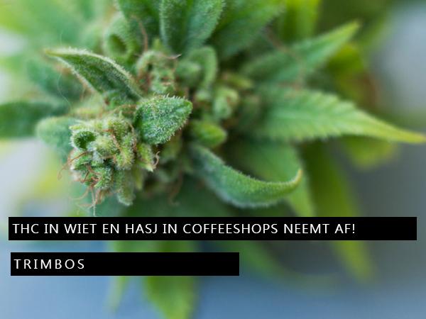 THC-concentraties in wiet en hasj in Nederlandse coffeeshops neemt af!