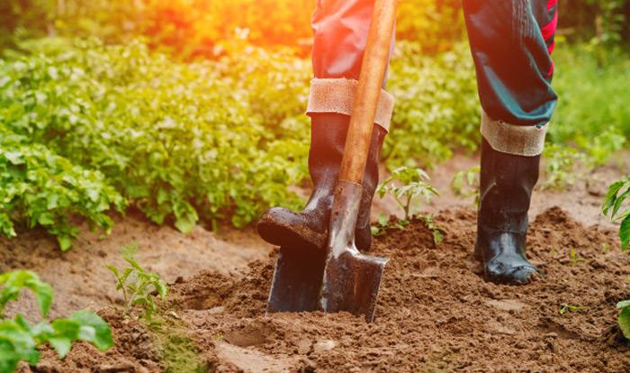kuil-graven-voor-buiten-wietplant