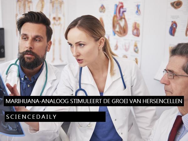 marihuana-analoog stimuleert de groei van hersencellen