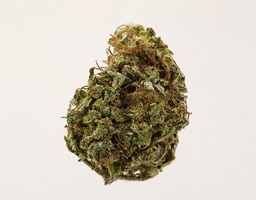 Girl-Scout-Cookies-clean-3